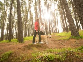 In the picturesque Blackwood Forest Recreation Park, you can walk your dog on a lead.