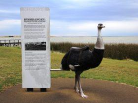Bushranger Birdman of the Coorong John Francis Peggotty