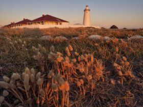Cape Willoughby Heritage Trail