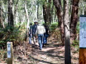 Honan Mint Walking Trail