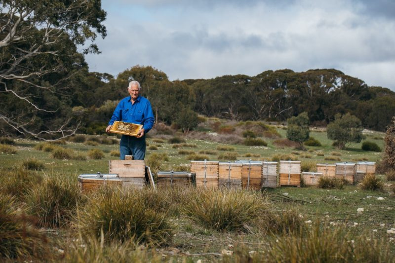 Inspecting the Beehives in the field