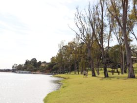 The grassy riverfront area is dotted with large gum trees.