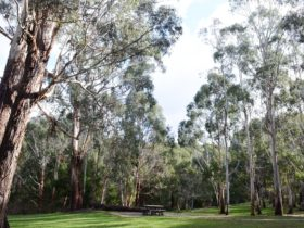 A picnic area surrounded by trees in Mount George Conservation Park