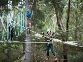 high ropes course 1