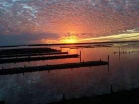 Smoky Bay Oyster Tours