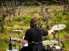 Join us at the new vinery, among the Lot 202 vineyard, to celebrate 20 years of TSW.