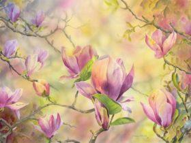Andrews Magnolias