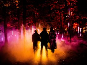 Silhouettes of three people in a Forest lit up with pink and orange light