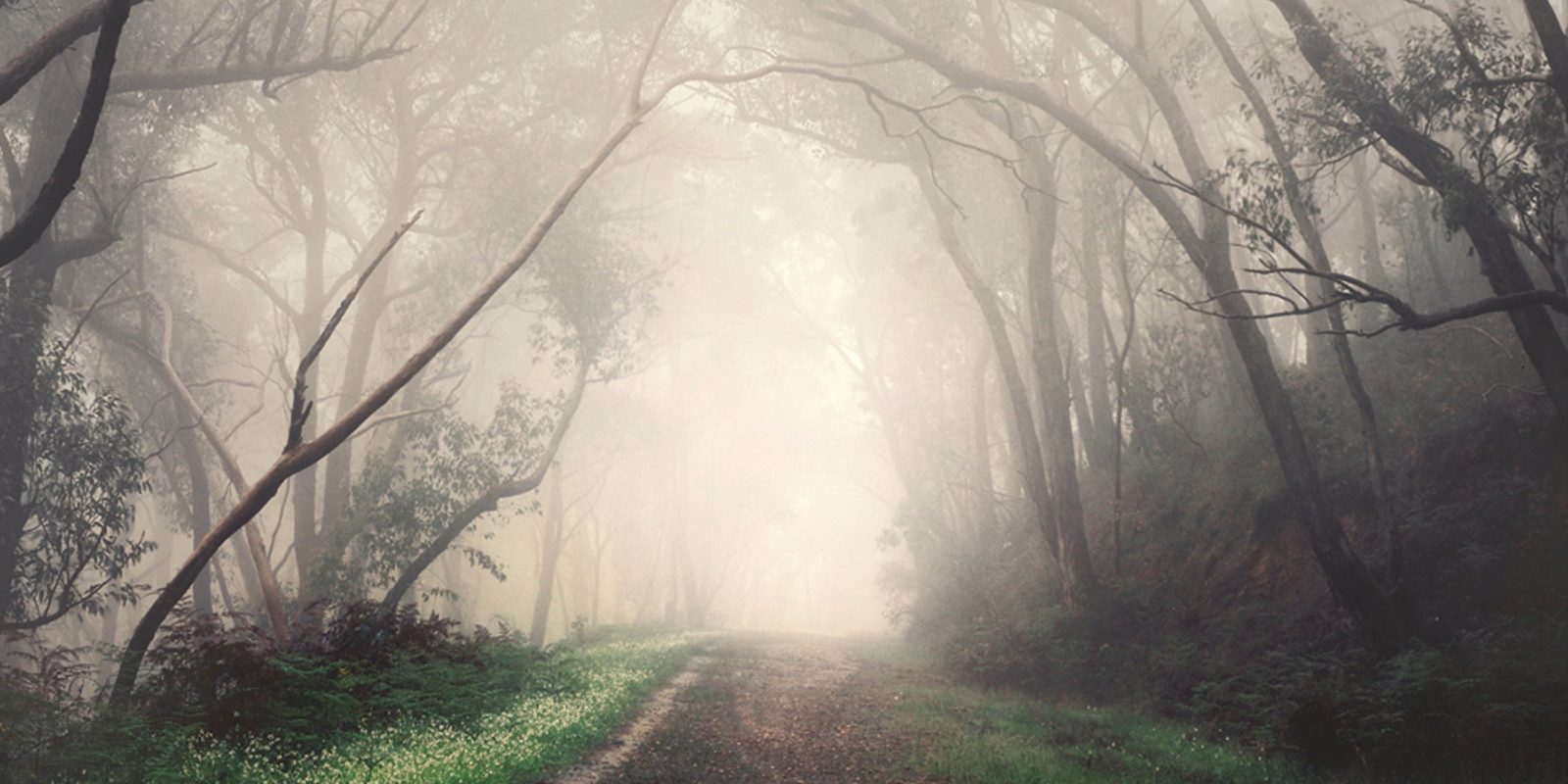 A Road through leafless trees covered in fog