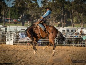 Rodeo by the Sea – Streaky Bay