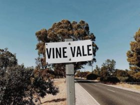 Vine Vale Winemakers Shed Day