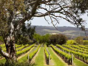Fox Creek Wines, Willunga, Fleurieu Peninsula, South Australia