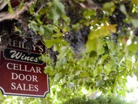 Reillys Cellar Door sign