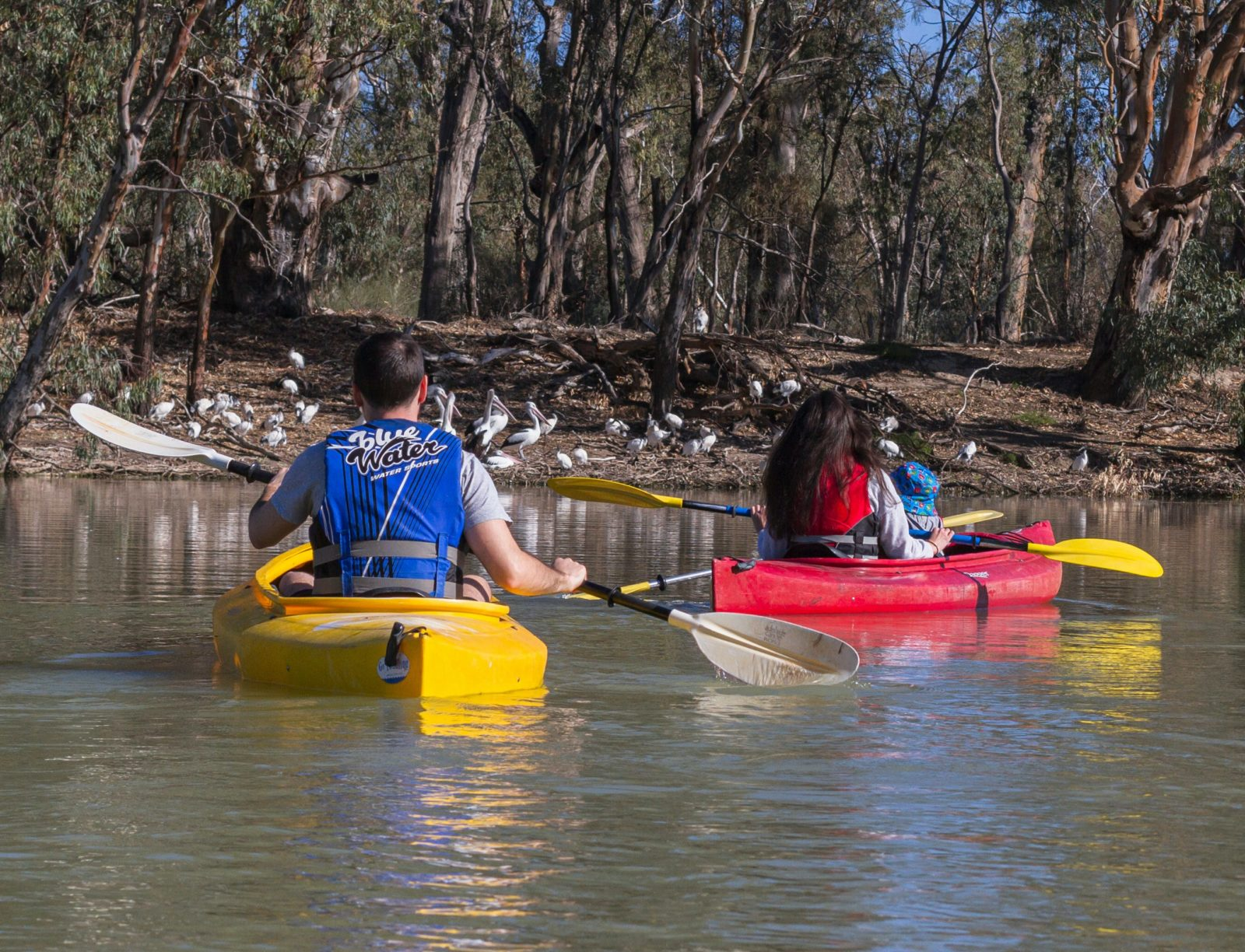 Convenient parking and kayak hire situated right on Renmark's wetland trail