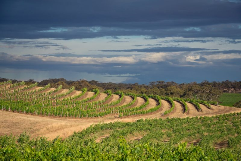 A beautiful organic vineyard to explore by 4WD