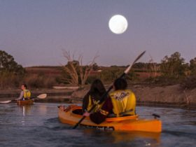 Moonlight Kayak tours in the secret backwaters on the Murray River above Renmark