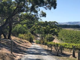 Explore the historic backroads of McLaren Vale and the Adelaide Hills wine regions.