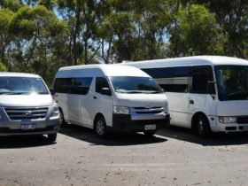 Adelaide Transport T.BUS fleet -7, 13 and 24 seat passengers mini buses
