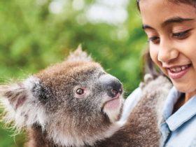 Koala Adventure Tours