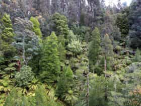 Arve Road Forest