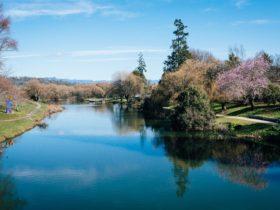 Meander River walking circuit at Deloraine