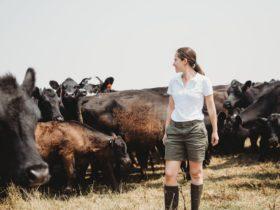 Ana walking through her herd