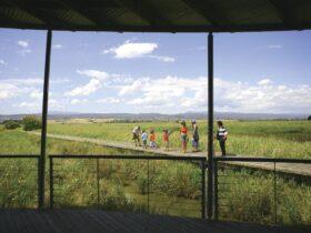 Families exploring the wetlands