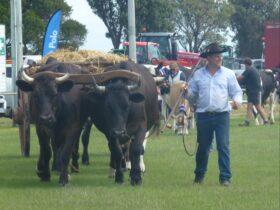 Circular Head Agricultural Show
