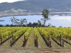 Derwent Estate Wines, Grape Vines
