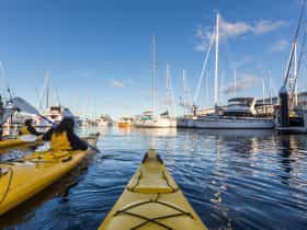 Kayakers in the Hobart Docks amongst sail boats