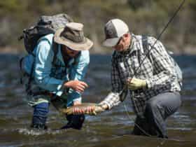 Wild brown trout from Tasmania's wilderness