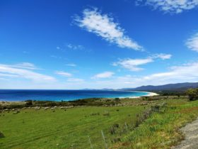 Enjoy the breathtaking views whilst travelling with Tassie East Coast Tours