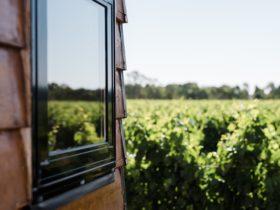 Window and Vineyard View