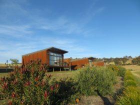 4 villas overlooking the olive grove