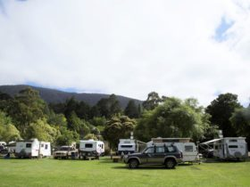 Image of the Oval Sites at the Holiday Park.