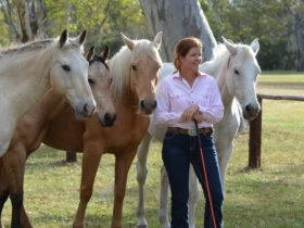 Chris and her liberty team of horses, Jo Cool, Durango, Cooper and Libby