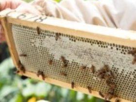 Backyard Beekeeping Ballarat