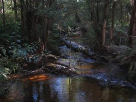 Big Pats Creek to Starlings Gap, visityarravalley.com.au