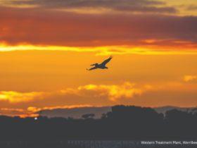 Birdlife - Werribee & Surrounds