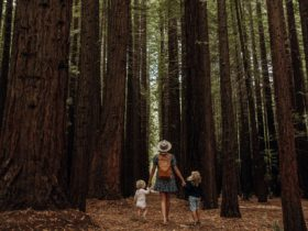 Family walking the Redwood Forest in Cement Creek
