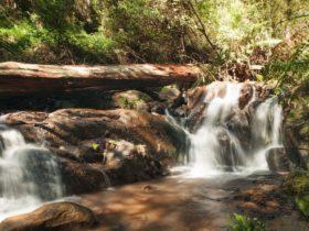 Olinda Falls Circuit, visityarravalley.com.au