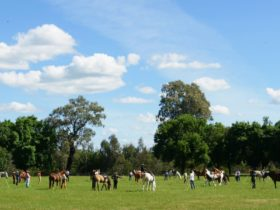 Horse Show at the oxley recreation reserve