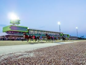 The Harness Racing Track with horses and drivers in a race, capturing the venue in the background.