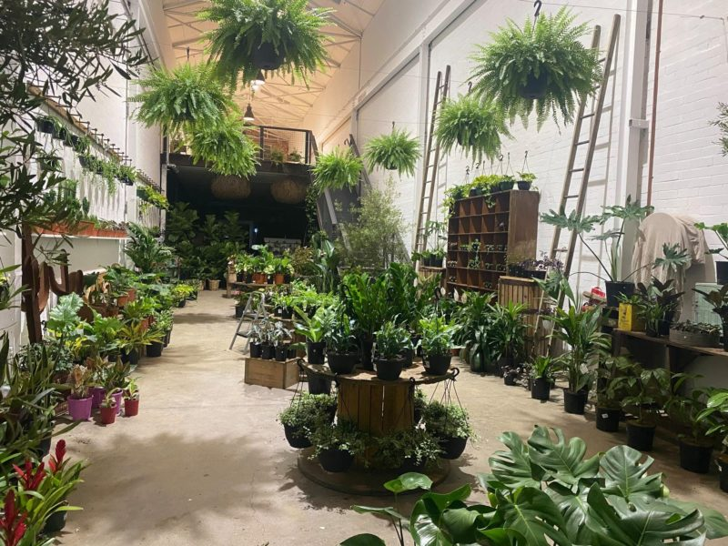white warehouse with rows of indoor plants on floor, beside walls and hanging from ceiling
