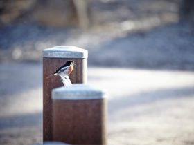 Small bird on Reids Walk