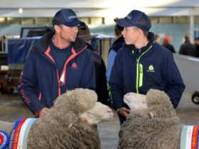 2019 Sheep Show Exhibitors discuss their days achievements.
