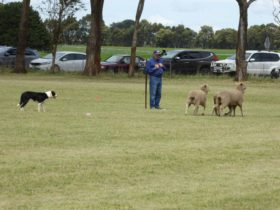 Dean Sheepdog Trials – Old Sniff Classic