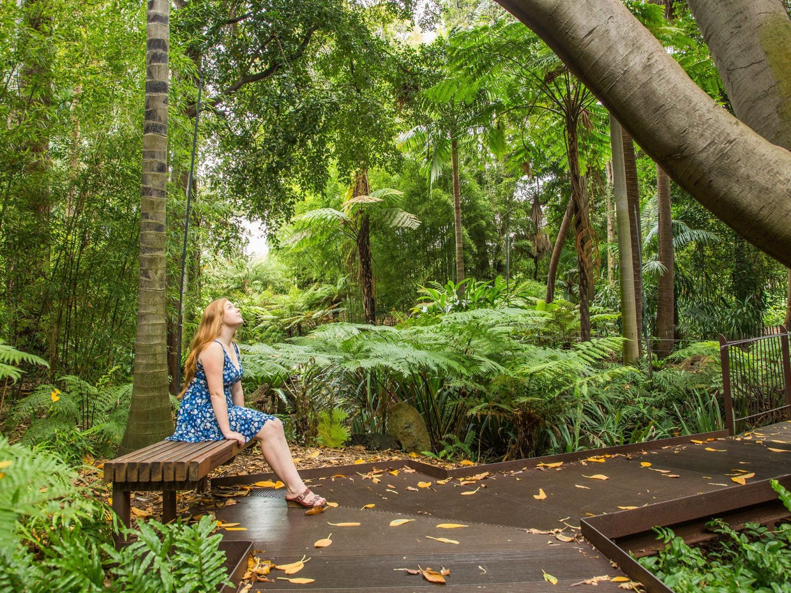 Forest Therapy at Melbourne Gardens
