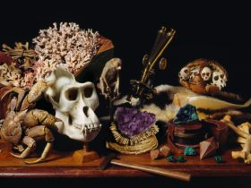 Still life arrangement featuring a gorilla skull