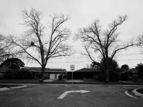 Trent Parke: Ballarat Avenue of Honour